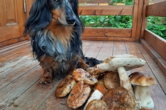 4 года, пора собирать грибы